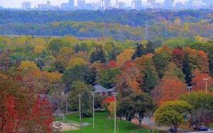 TTT Ontario green